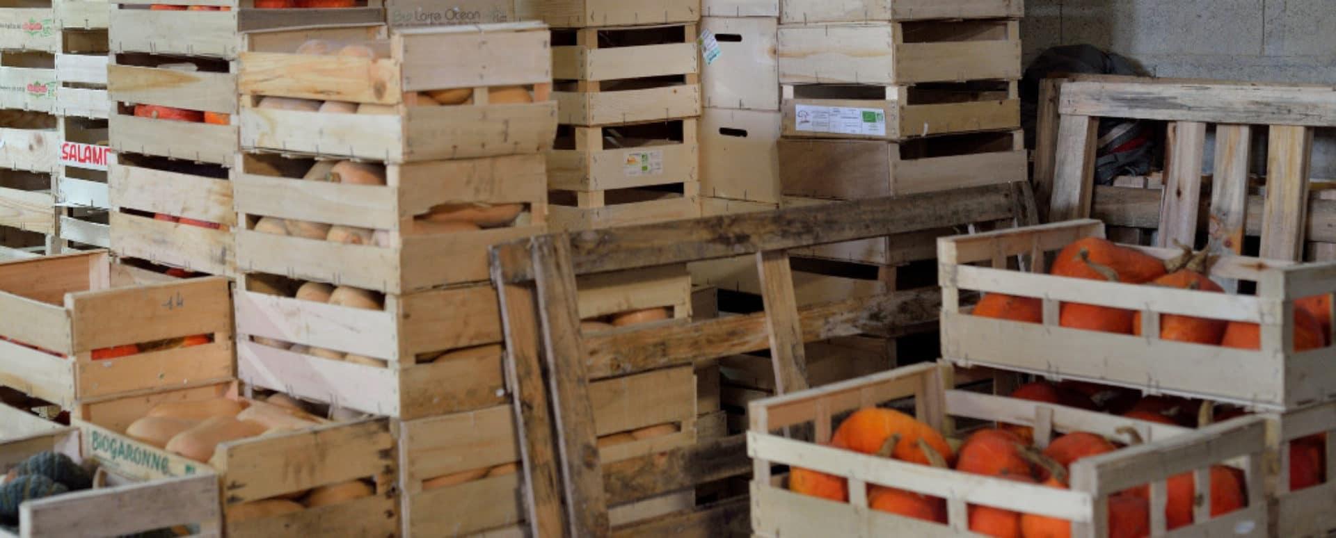 GAEC Dureau - Exploitation maraîchère bio : fruits et légumes bio à Arthon en Retz