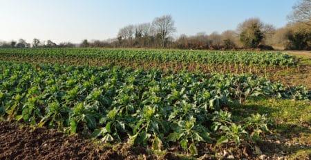 La ferme bio DUREAU : des sols fertiles et vivants