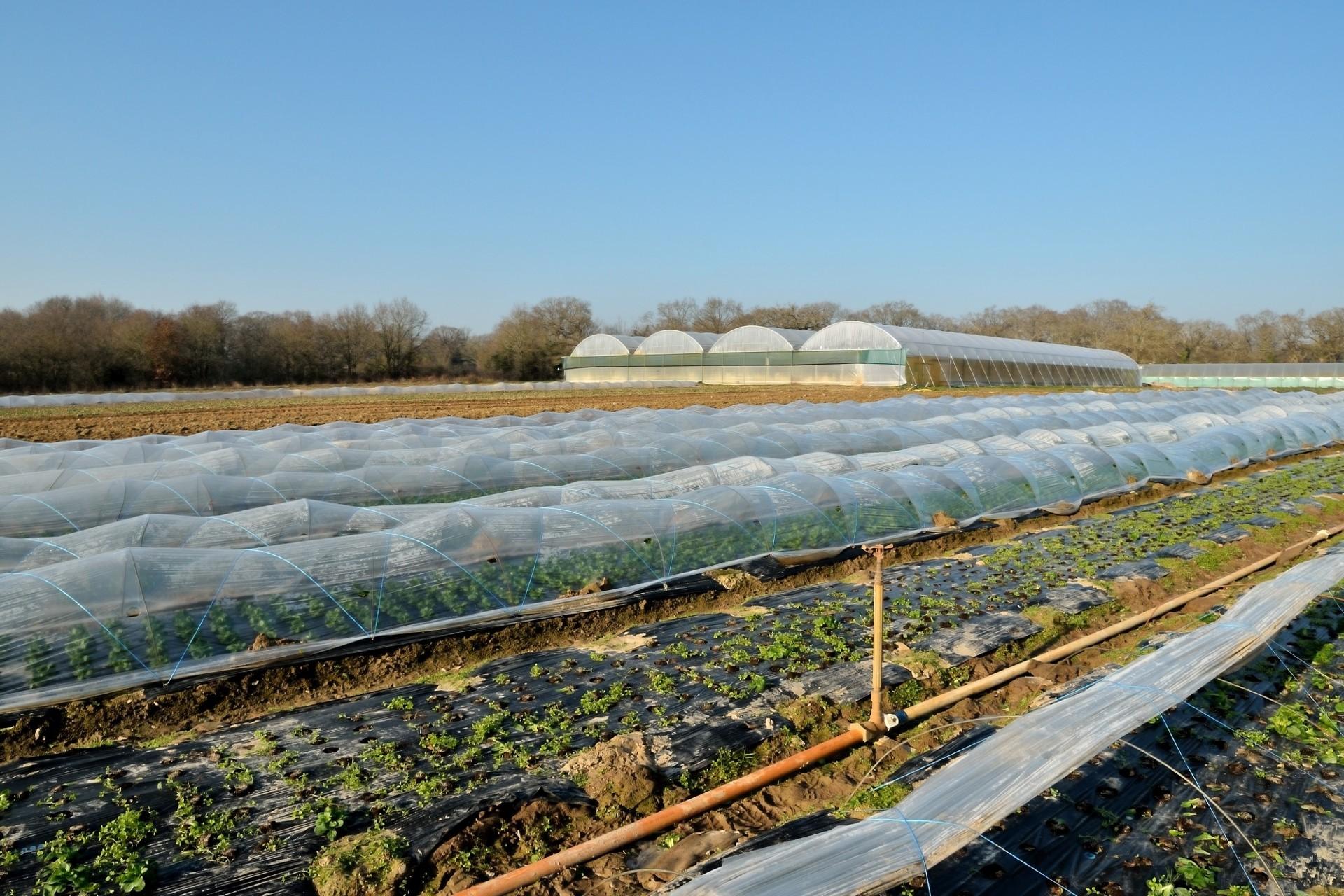 Fruits et légumes bio à Chaumes en Retz - GAEC Dureau