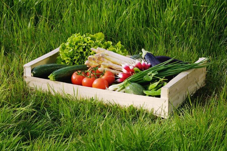 Paniers de légumes bio hebdomadaires