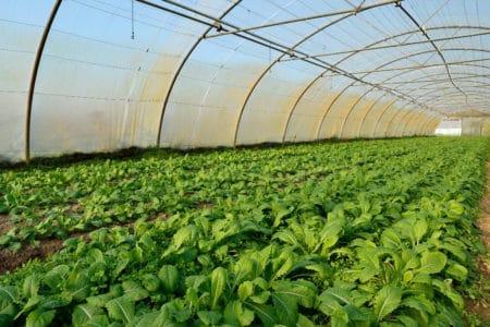 GAEC Dureau : producteur de fruits et légumes bio